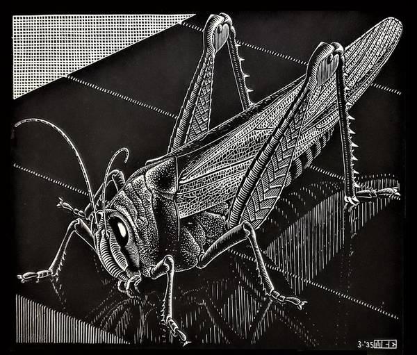 Photograph - Escher 167 by Rob Hans