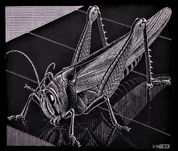 Photograph - Escher 173 by Rob Hans