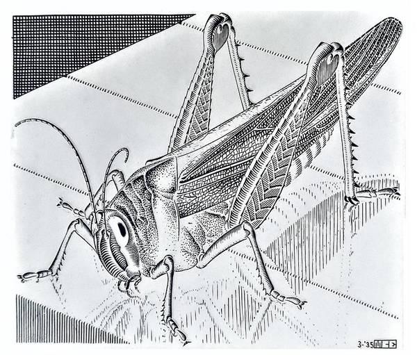 Photograph - Escher 174 by Rob Hans
