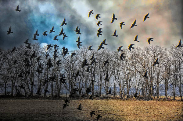 Bird In Flight Digital Art - Estancia Evening by Jan Amiss Photography