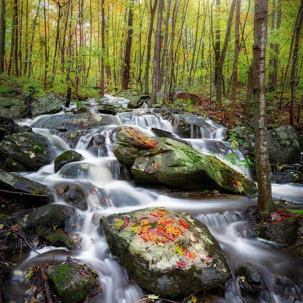 Photograph - Ethereal Forest Square by Bill Wakeley