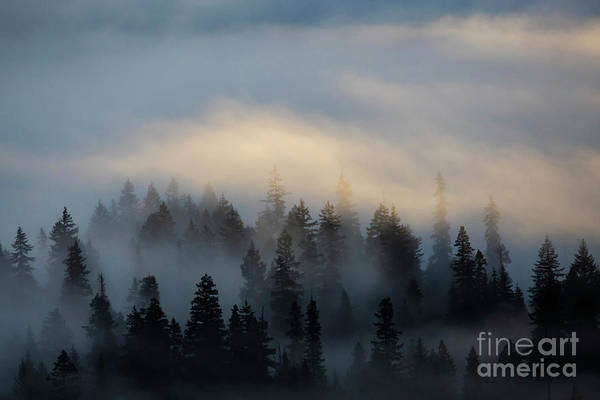Wall Art - Photograph - Ethereal by Mike Dawson
