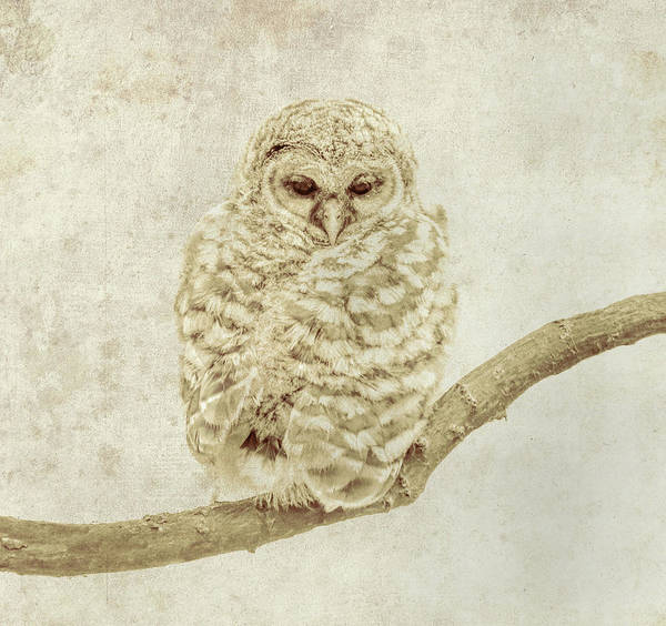 Photograph - Ethereal Owl by Dan Sproul