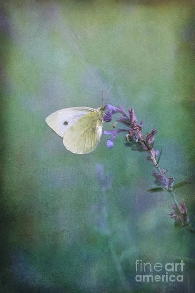 Digital Art - Butterfly Kisses by Liz Alderdice