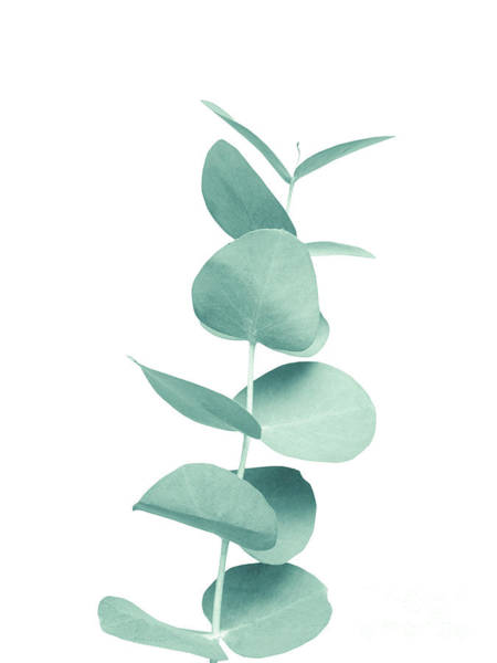 Single Leaf Mixed Media - Eucalyptus Green Vibes #1 #foliage #decor #art by Anitas and Bellas Art
