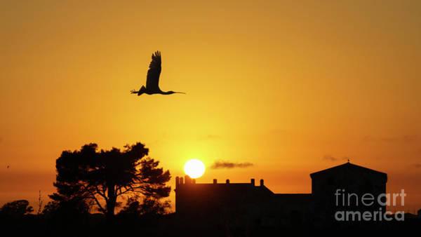 Photograph - Eurasian Spoonbill Platalea Leucorodia Flying At Sunset Cadiz Spain by Pablo Avanzini