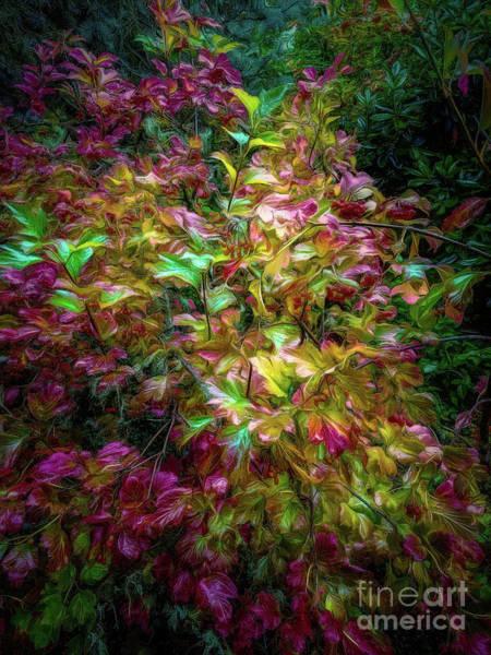 Photograph - European Cranberry Bush by Jon Burch Photography