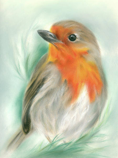 Pastel - European Robin With Pine by MM Anderson