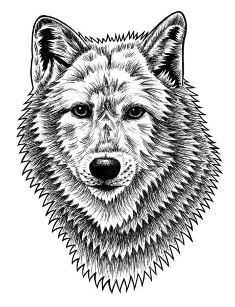 Furry Drawing - European Wolf - Ink Illustration by Loren Dowding