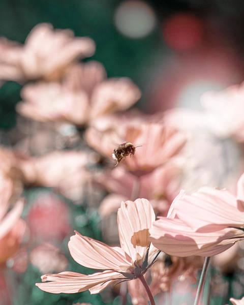 Photograph - Evelyn by Gabor Estefan