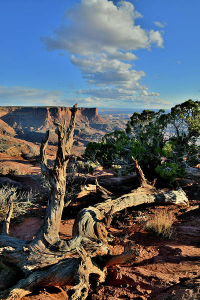 Photograph - Evening At Green River Overlook In Canyonlands by Ray Mathis