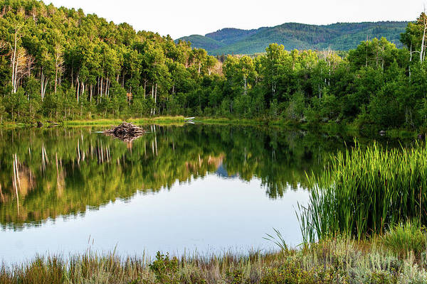 Photograph - Evening At Ivie Pond by TL Mair