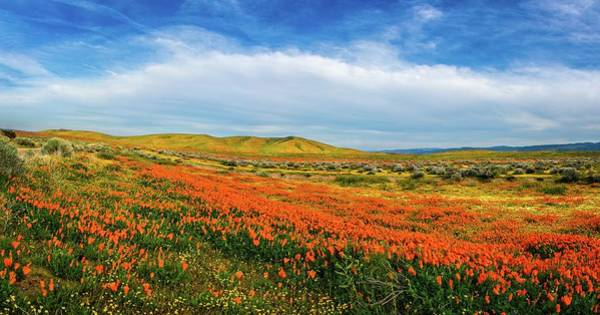 Photograph - Evening Beauty At The Reserve Panorama - Superbloom 2019 by Lynn Bauer