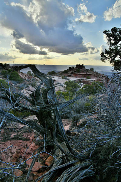 Photograph - Evening Comes To Canyonlands National Park by Ray Mathis