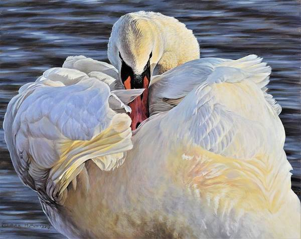 Painting - Evening Glow - Swan by Alan M Hunt