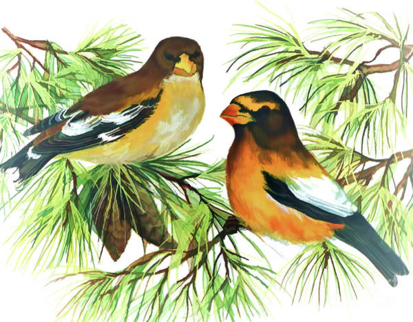 Digital Art - Evening Grosbeaks by D Hackett