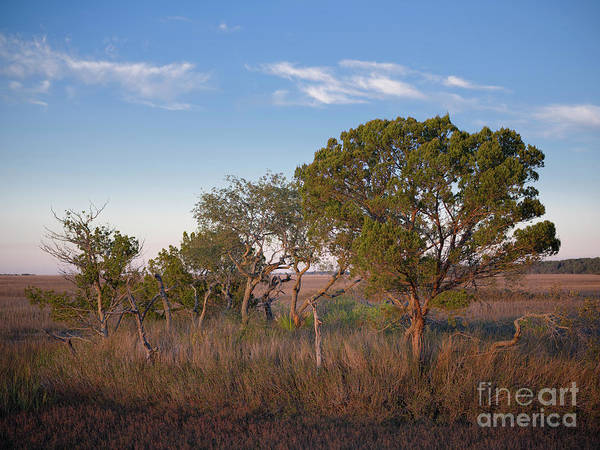 Photograph - Evening In The Salt Marsh by Patrick M Lynch