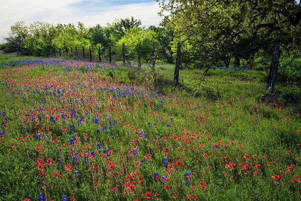Wall Art - Photograph - Evening Light And Wildflowers In The Texas Hill Country by Lynn Bauer