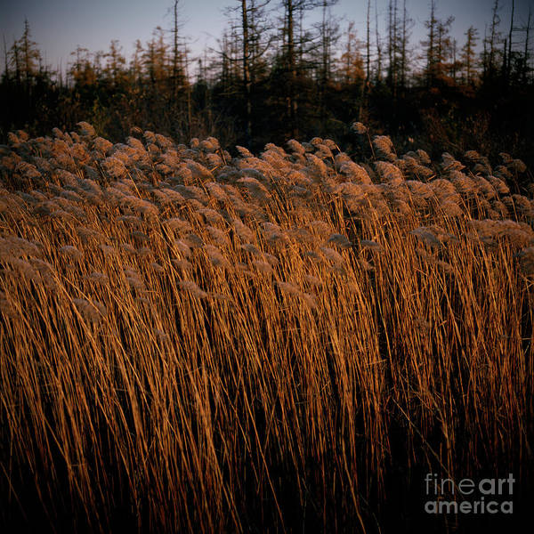 Photograph - Evening Light by RicharD Murphy