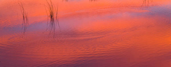 Wall Art - Photograph - Evening Reflections In Pond by Eastcott Momatiuk