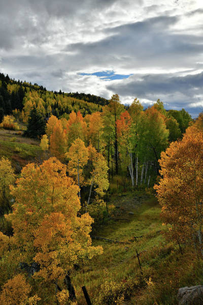 Photograph - Evening Sunlight On Aspens Along Highway 62 by Ray Mathis