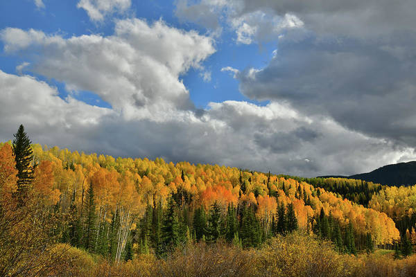 Photograph - Evening Sunlight On Golden Aspens by Ray Mathis