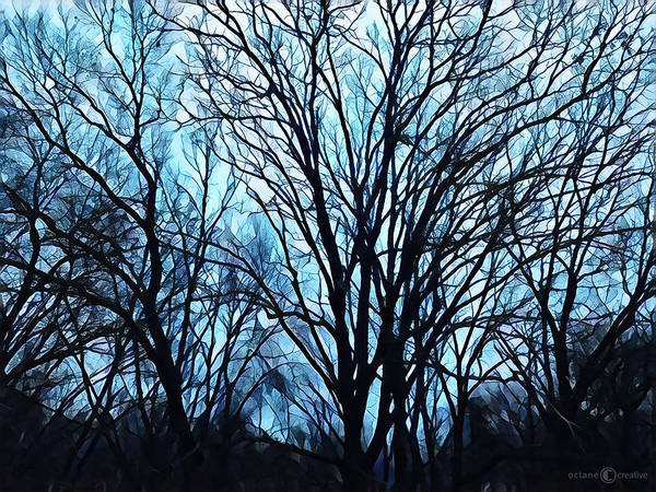 Photograph - Evening Trees 0423 by Tim Nyberg