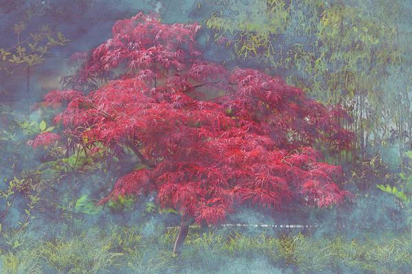 Bonsai Tree Digital Art - Ever Red 2 by Michael Hughes