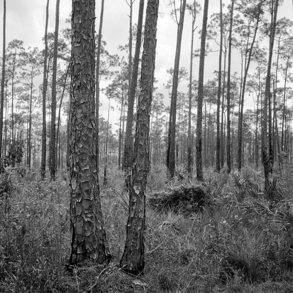 Photograph - Everglades 041903 by Rudy Umans