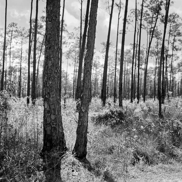 Photograph - Everglades-041904 by Rudy Umans