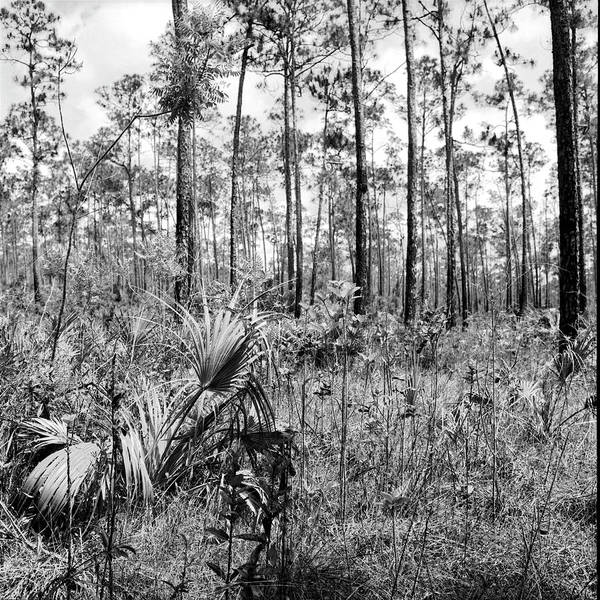 Photograph - Everglades-041905 by Rudy Umans