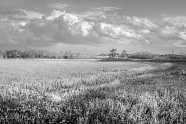 Photograph - Everglades Clouds In Black And White  by Debra and Dave Vanderlaan