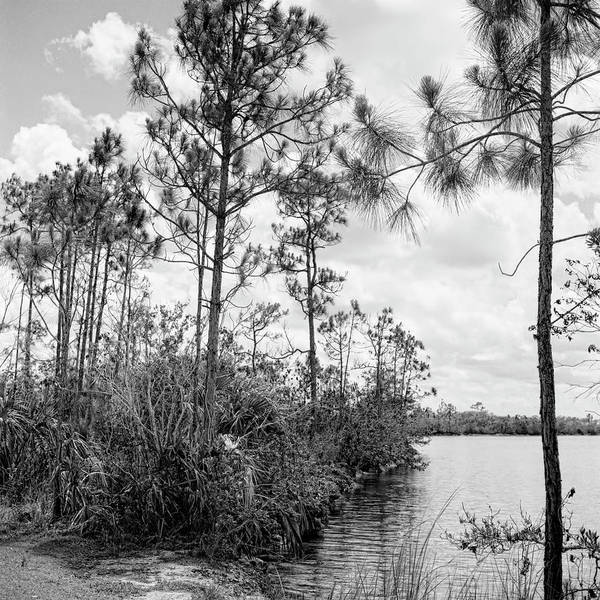 Photograph - Everglades Lake 041901 by Rudy Umans