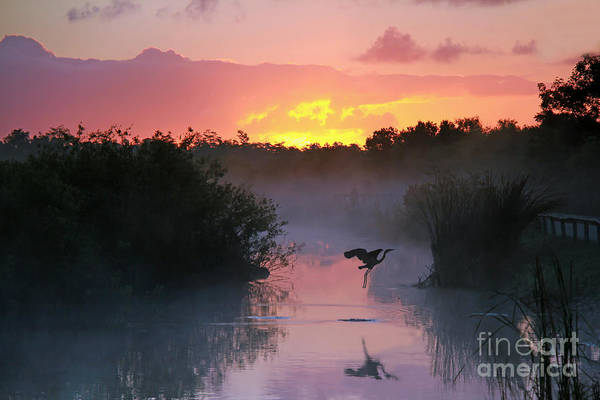 Ecosystem Wall Art - Photograph - Everglades National Park At Sunrise by Brian Lasenby