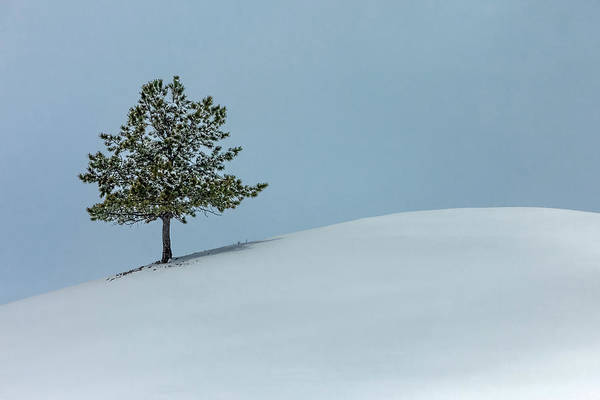Evergreens Photograph - Evergreen Hill by Todd Klassy