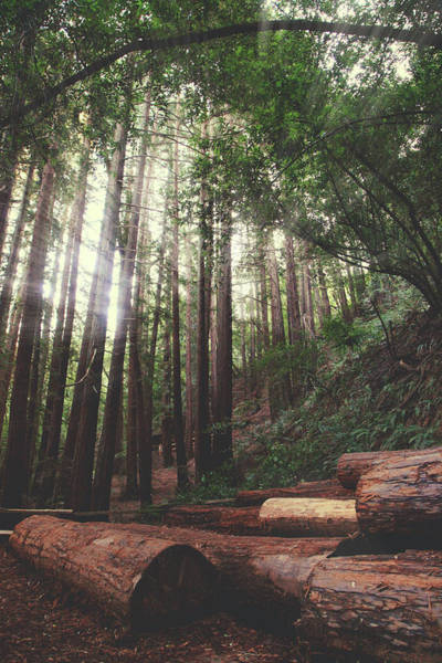 Redwoods Photograph - Every Moment Counts by Laurie Search