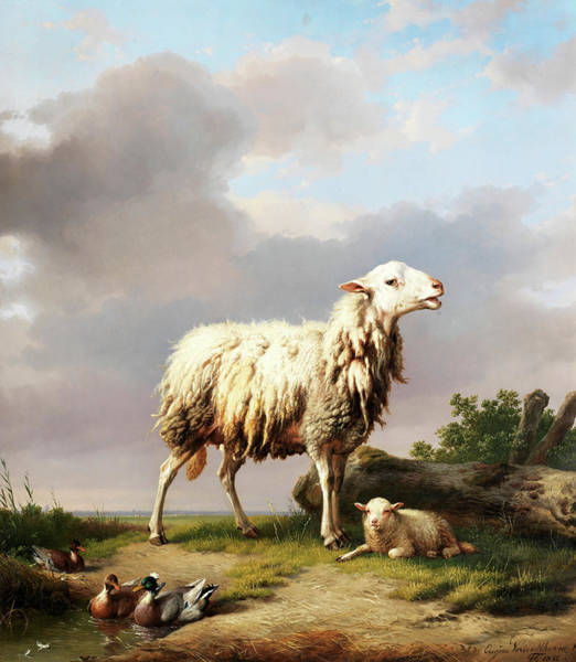 Rural Wall Art - Painting - Ewe With Her New Born Lamb by Eugene Joseph Verboeckhoven