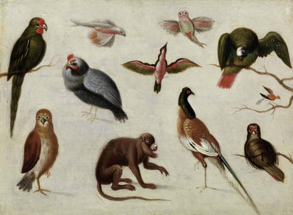 Wall Art - Painting - Exotic Animals -1 by Jan van Kessel