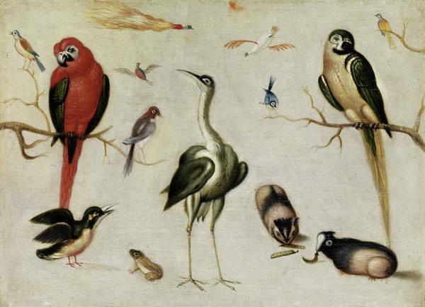 Wall Art - Painting - Exotic Animals by Jan van Kessel