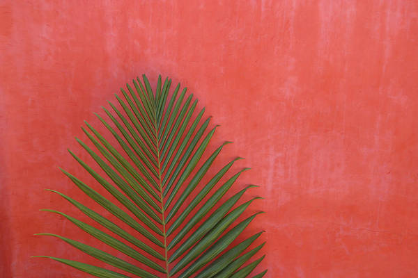 Mexico Photograph - Exotic Background by Lucgillet