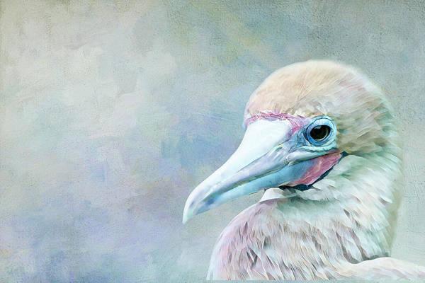 Boobies Digital Art - Exotic Bird by Terry Davis