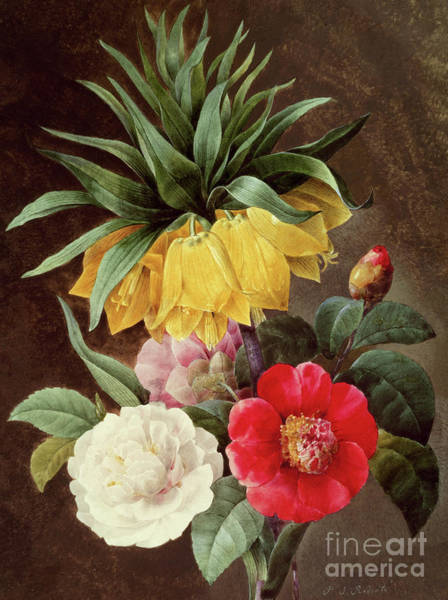 Wall Art - Painting - Exotic Flowers by Pierre Joseph Redoute