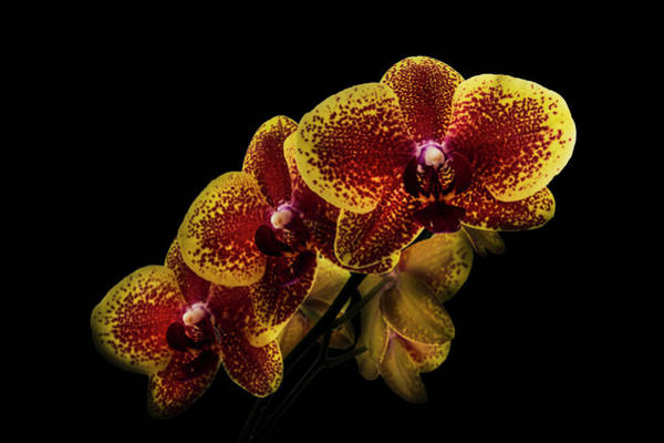 Wall Art - Photograph - Exotic Orchid Beauty by Debra and Dave Vanderlaan