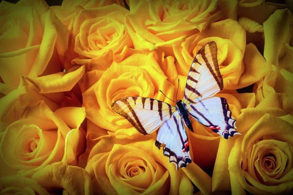 Wall Art - Photograph - Exotic White Butterfly On Yellow Roses by Garry Gay