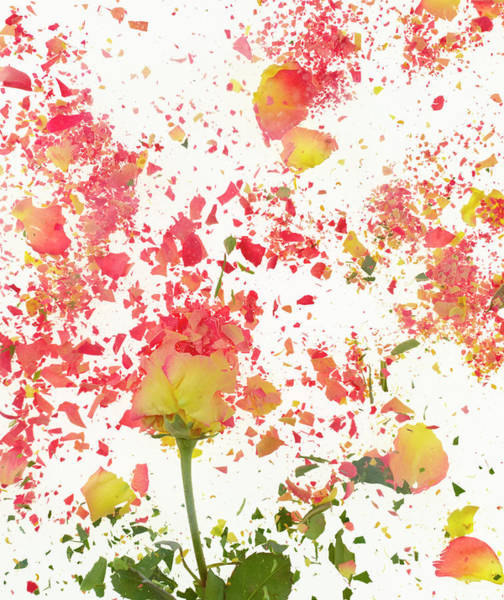 Break Up Photograph - Exploding Flower by Don Farrall