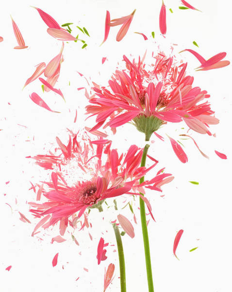 Break Up Photograph - Exploding Flowers by Don Farrall