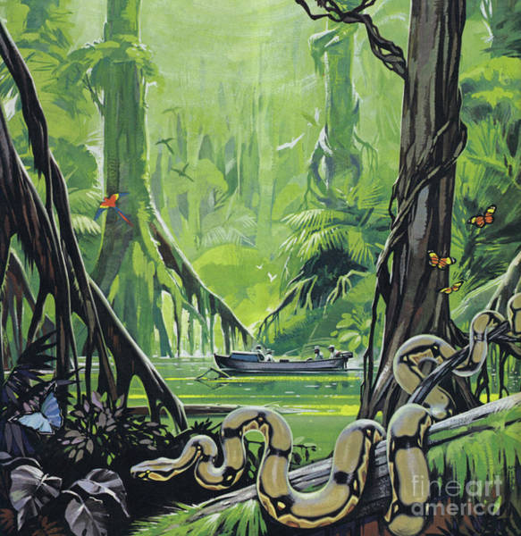 Wall Art - Painting - Exploring The River Amazon by Angus McBride