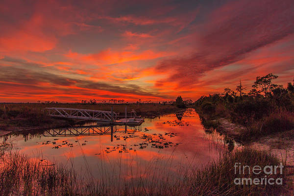 Art Print featuring the photograph Explosive Sunset At Pine Glades by Tom Claud