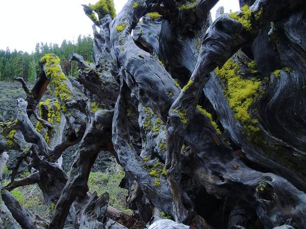 Photograph - Exposed And Gnarly by Vincent Green