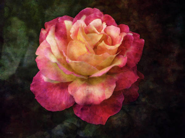 Photograph - Extravagance 5486 Idp_2 by Steven Ward